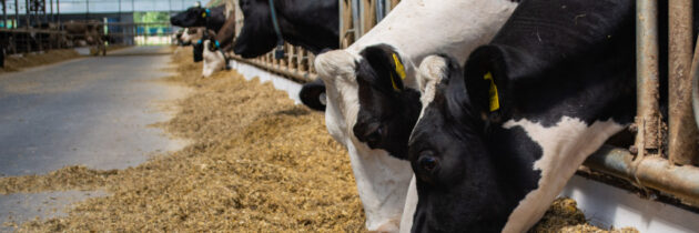 Składniki witaminowo – mineralne w premiksach dla krów mlecznych